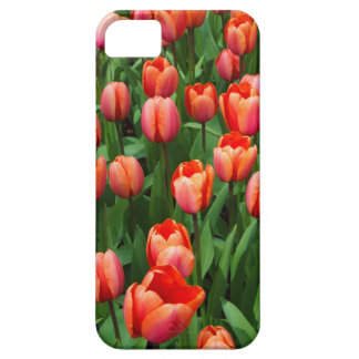 A Field of Red Tulips iPhone 5 Case
