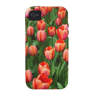 A Field of Red Tulips Vibe iPhone 4 Cover