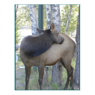 A flexible neck comes in handy postcard