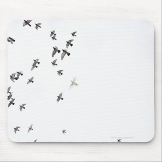 A flock of birds is flying at the sky mouse mat