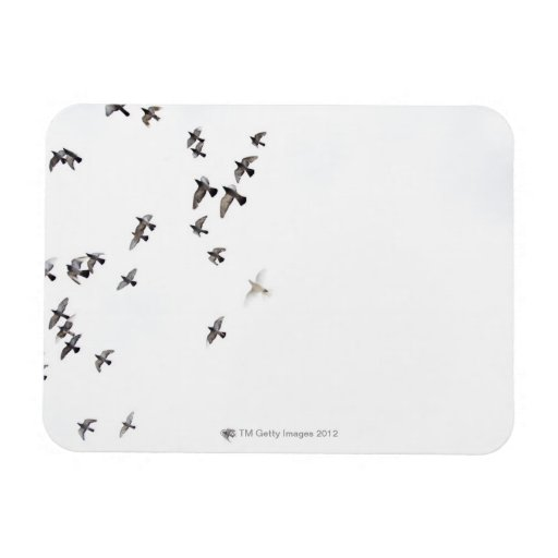 A flock of birds is flying at the sky vinyl magnets