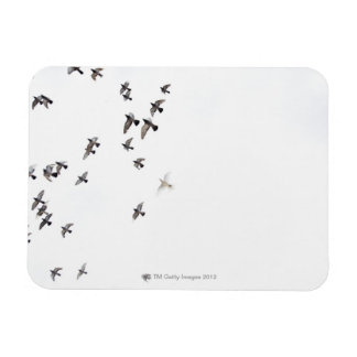 A flock of birds is flying at the sky rectangular photo magnet
