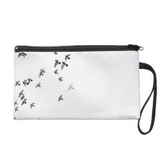 A flock of birds is flying at the sky wristlet