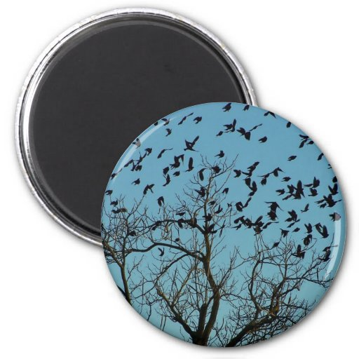 a Flock of birds Magnets