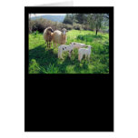 A Flock of Sheep Card