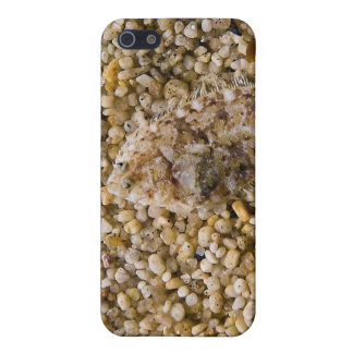 A Flounder Fish Blends in with its Surroundings iPhone 5/5S Cover