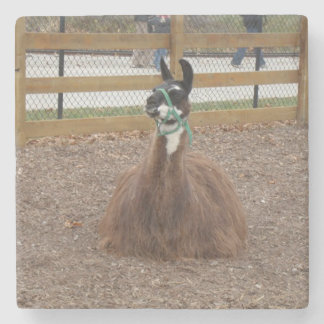 A Fluffy Brown Llama laying down in zoo pen Stone Coaster