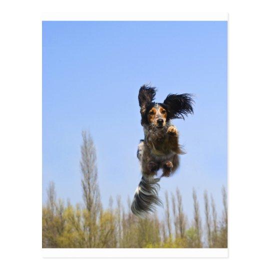A flying dog! postcard