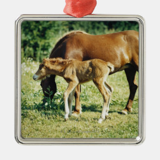 A foal and a horse in a pasture. christmas ornament