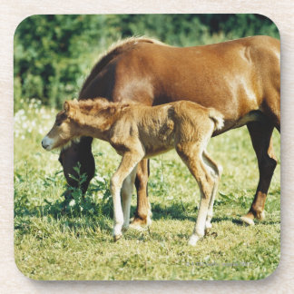 A foal and a horse in a pasture. coaster