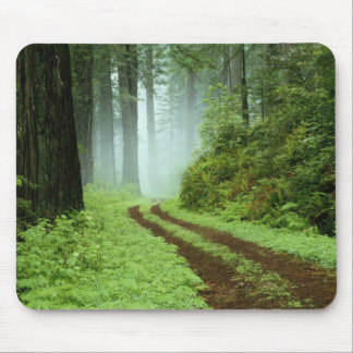 A forest path in Redwoods State Park, California. Mouse Mat