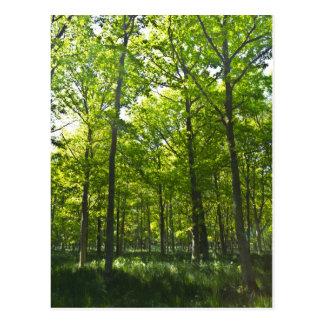 A Forest walk Postcard