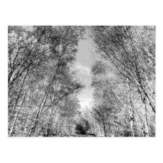 A Forest Walk Postcards