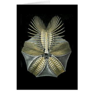 A Fossil Sea Urchin Card