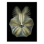 A Fossil Sea Urchin Postcard