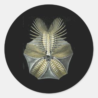 A Fossil Sea Urchin Round Sticker