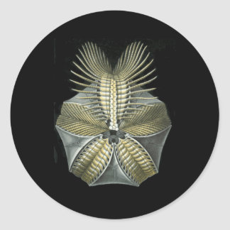 A Fossil Sea Urchin Round Stickers