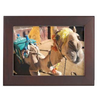 A friendly camel awaits its next rider, Cairo, Keepsake Box