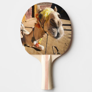 A friendly camel awaits its next rider, Cairo, Ping Pong Paddle