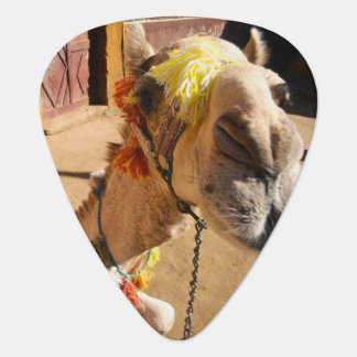 A friendly camel awaits its next rider, Cairo, Plectrum