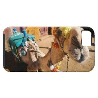 A friendly camel awaits its next rider, Cairo, Tough iPhone 5 Case