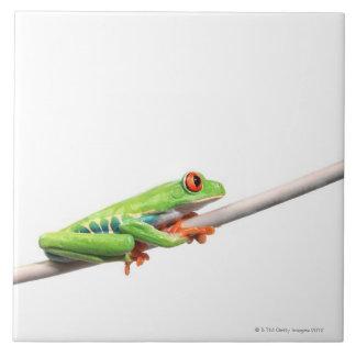 A frog hanging on tile