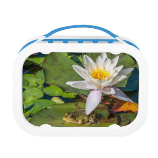 A frog under a flower of water lily lunch box