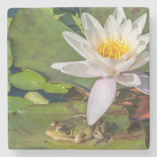 A frog under a flower of water lily stone coaster