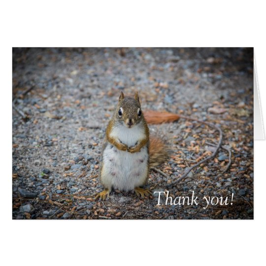 A Funny Standing Squirrel Thank You Card
