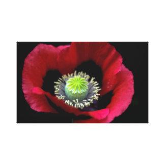 A Garden Poppy Canvas