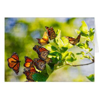A Gathering of Monarch Butterflies Card