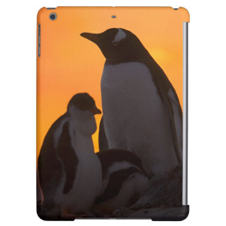 A gentoo penguin adult and chick are silhouetted