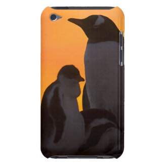 A gentoo penguin adult and chick are silhouetted barely there iPod cover