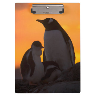 A gentoo penguin adult and chick are silhouetted clipboard