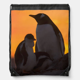 A gentoo penguin adult and chick are silhouetted drawstring bag