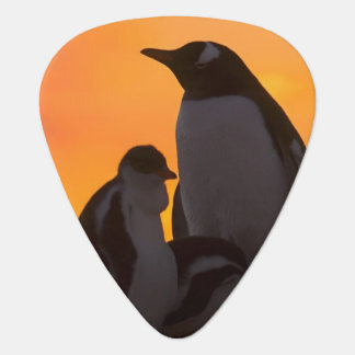 A gentoo penguin adult and chick are silhouetted guitar pick