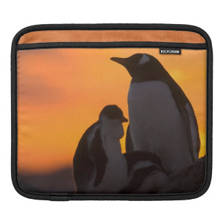 A gentoo penguin adult and chick are silhouetted iPad sleeve