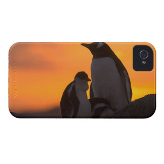 A gentoo penguin adult and chick are silhouetted iPhone 4 Case-Mate case