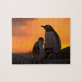 A gentoo penguin adult and chick are silhouetted jigsaw puzzle