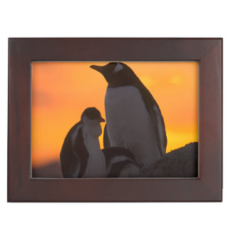 A gentoo penguin adult and chick are silhouetted keepsake box