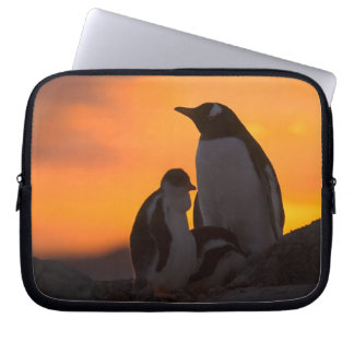 A gentoo penguin adult and chick are silhouetted laptop sleeve