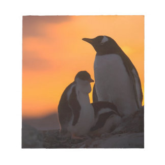 A gentoo penguin adult and chick are silhouetted notepad