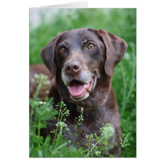 A German Shorthaired Pointer dog in the grass Card