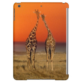 A Giraffe couple walks into the sunset, in