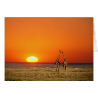 A Giraffe couple walks into the sunset, in Card