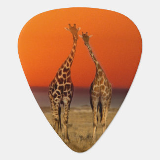 A Giraffe couple walks into the sunset, in Guitar Pick