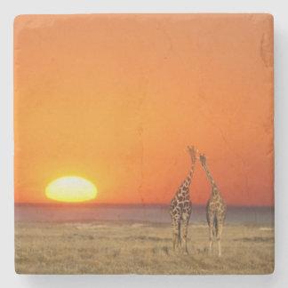 A Giraffe couple walks into the sunset, in Stone Coaster