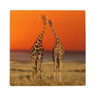 A Giraffe couple walks into the sunset, in Wood Coaster