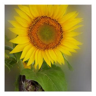 a glowing sunflower