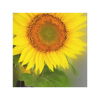 a glowing sunflower canvas print